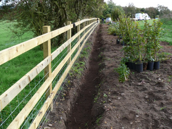 Planting Hedge - Tree and Hedge Planting