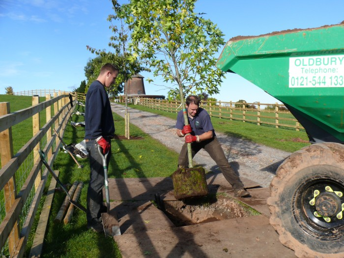 Planting Tree's, Rugeley, Staffordshire