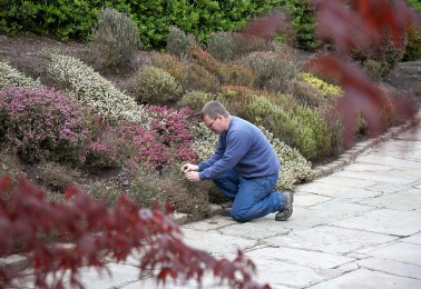 Shrub Pruning and Border Maintenance