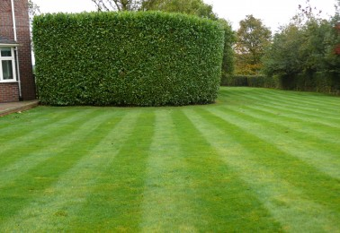 Expert Hedge Maintenance and Trimming in Knutsford