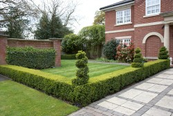 Expert Box Hedging with Topiary Spiral in Stafford