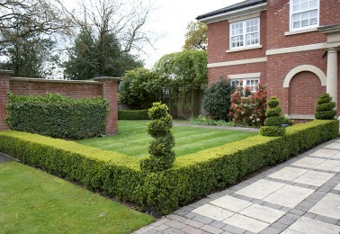 Skilled Gardeners  in Stafford - Box Hedging and Topiary