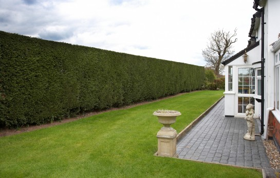 Tall Boundary Hedge Cut by Gardeners in Stafford
