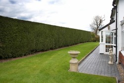 Top Tips - Hedge Cutting - Tall Boundary Hedge Cutting