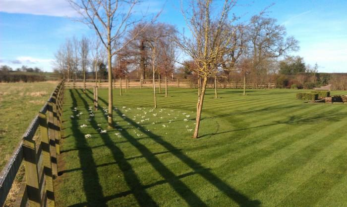 Gardener in Macclesfield - Lawn Care
