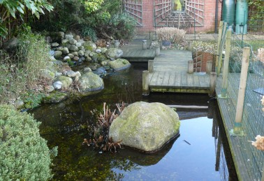Garden Pond Ideas - Perfect for Freshwater Fish