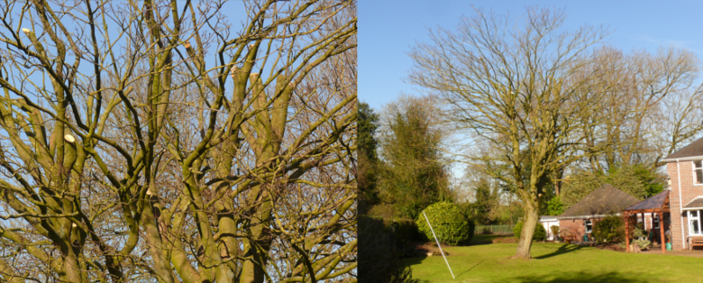 Tree Surgery and Planting Services