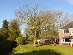 Tree Surgery in Staffordshire and Cheshire