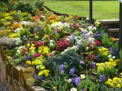 Gardener in Macclesfield