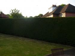 Hedge Cutting in Stafford