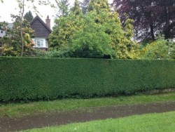 Hedges in Staffordshire