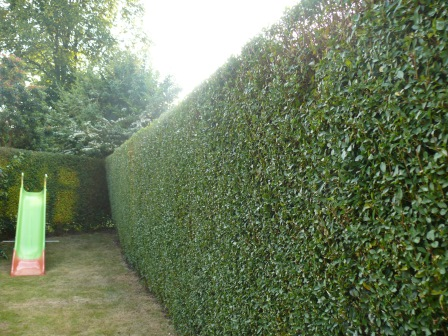 Hedge Cutting Stoke on Trent