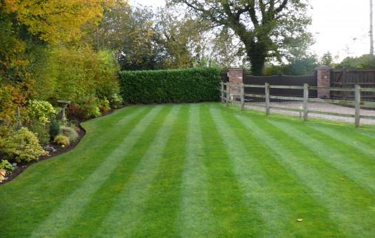 Lawn Mowing, Border Maintenance 5