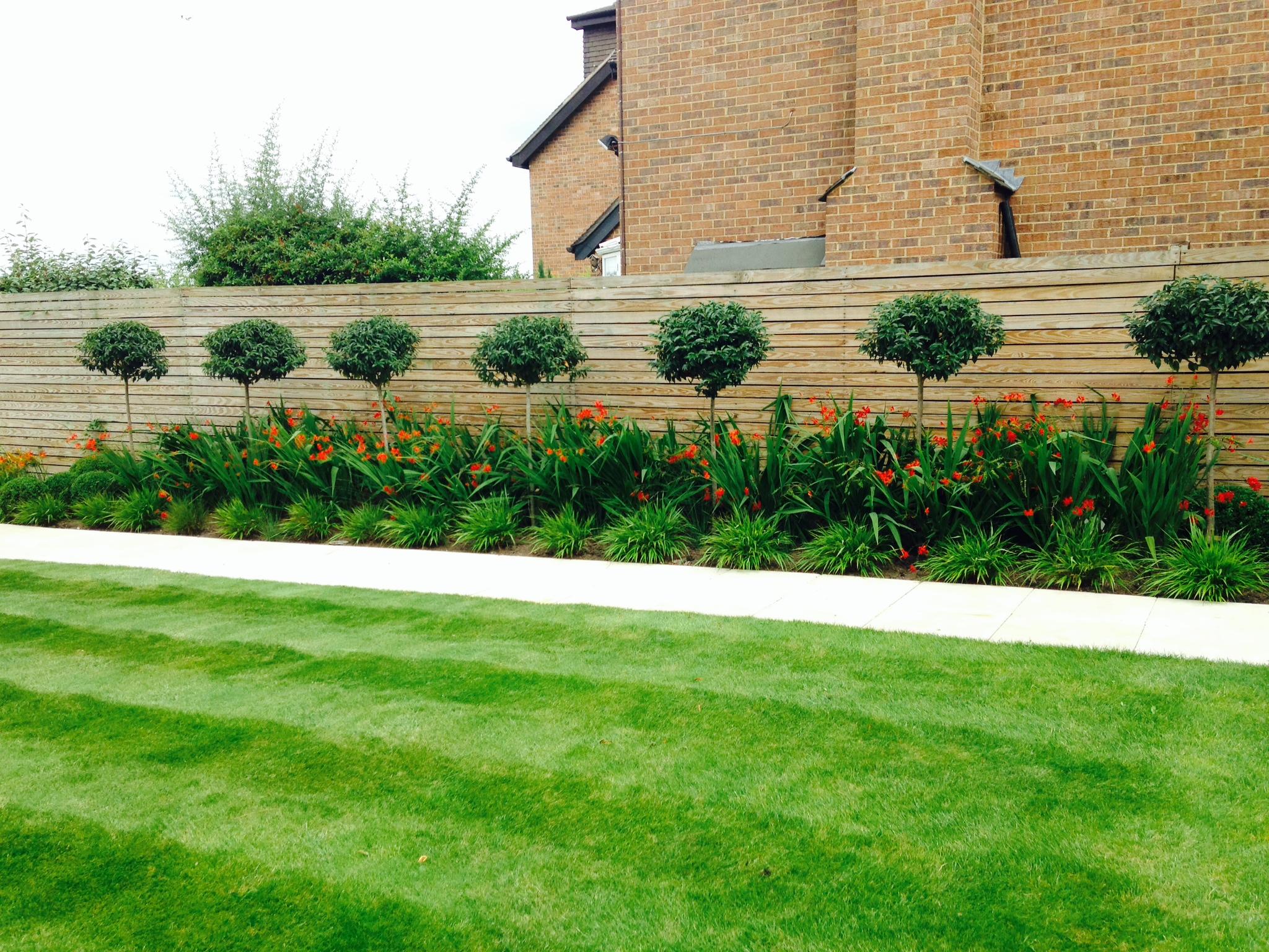 Border Maintenance, Path, Tree Planting, Topiary, Ball 4
