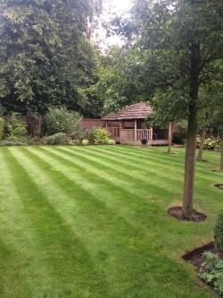 Lawn Mowing, Border Maintenance 12