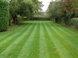 Lawn Mowing, Large Lawn 2