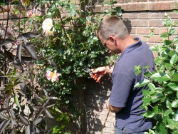 Pruning Rose Bush, Jason 2