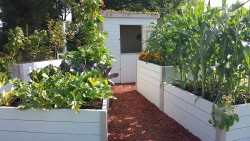 Food Garden 1