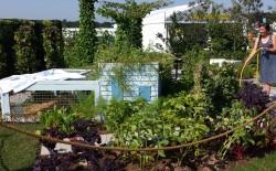 Food Garden 5
