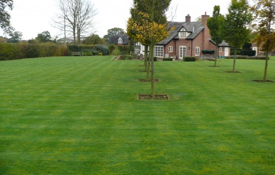 Lawn Scarification and Aeration