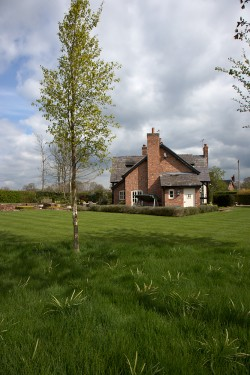 Lawn Mowing, Meadow Lawn, Smith, Nantwich 1