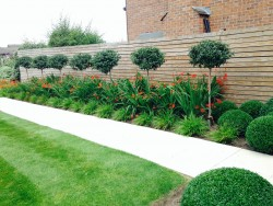 Landscaping - planting
