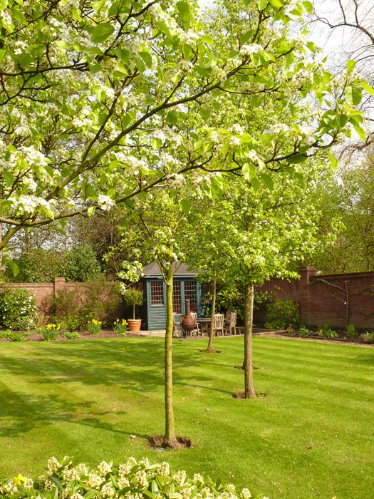Gardener in Haslington
