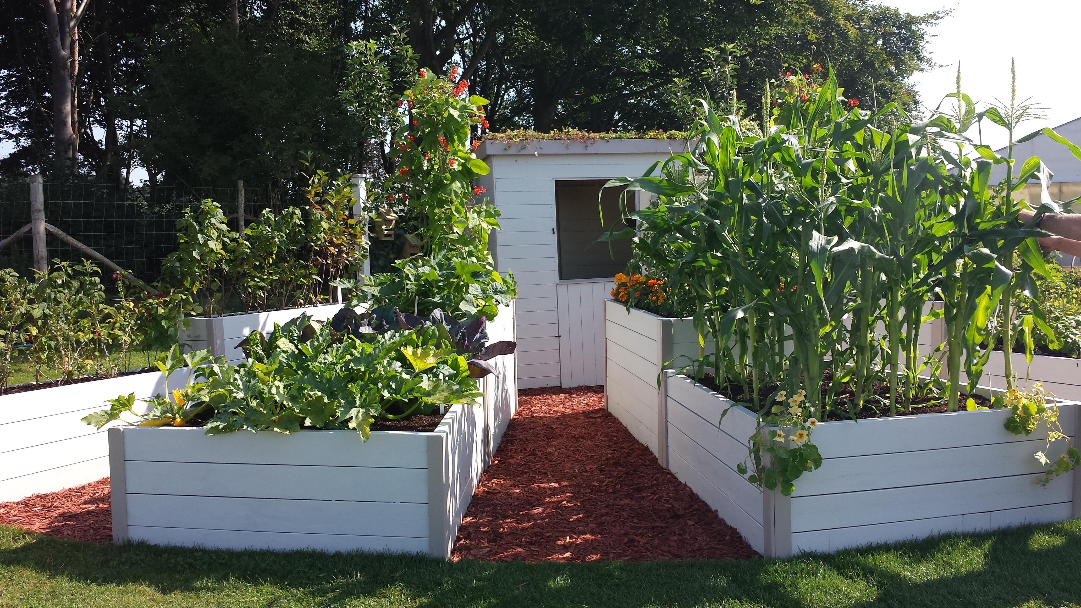 Grow your own vegetables jhps gardens jhps gardens for Grow your own vegetable garden