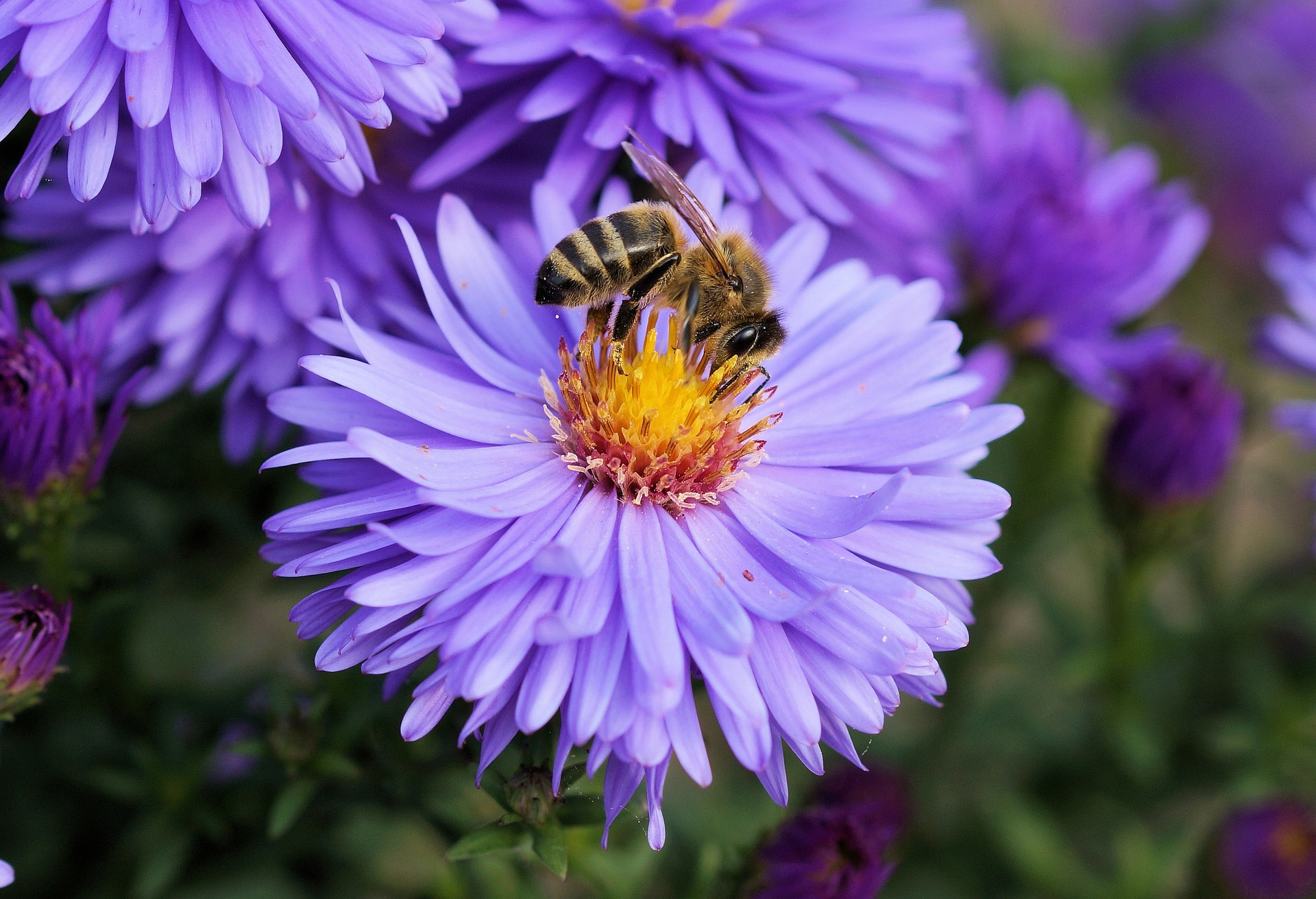 bee on purple flower