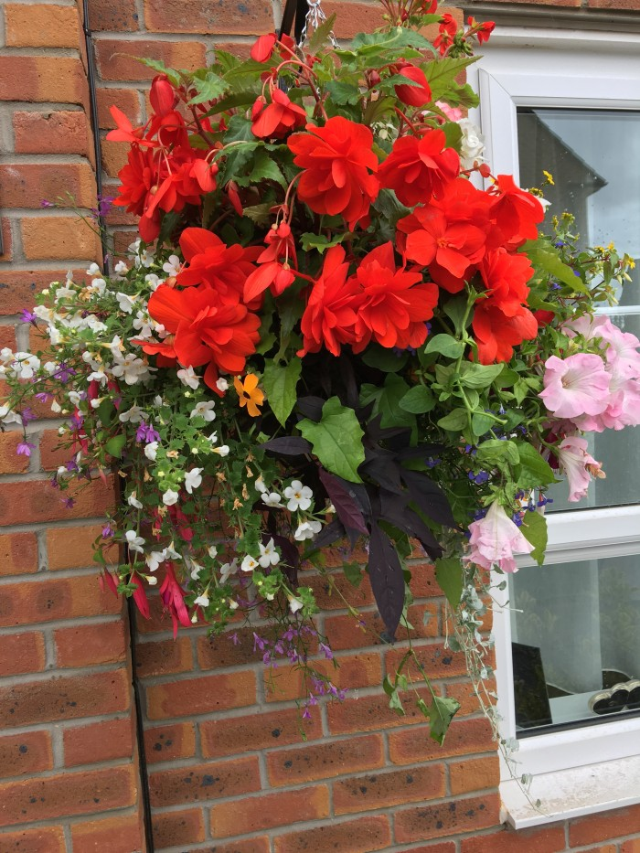 Hanging Baskets 2