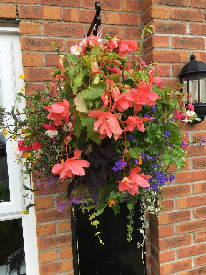 Hanging Baskets 3