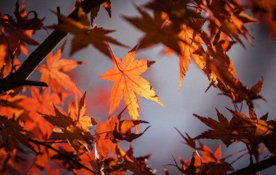 autumn-leave-1415541_1920