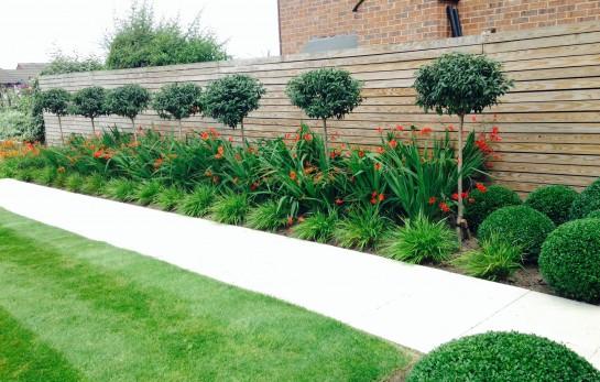 Border Maintenance, Path, Tree Planting, Topiary Ball 1