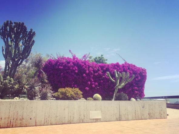 Monaco Inspired Gardens
