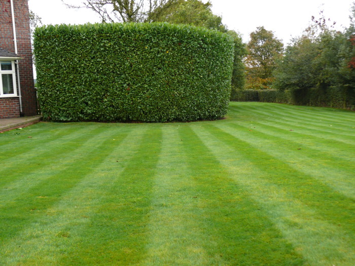 Hedge Cutting 15