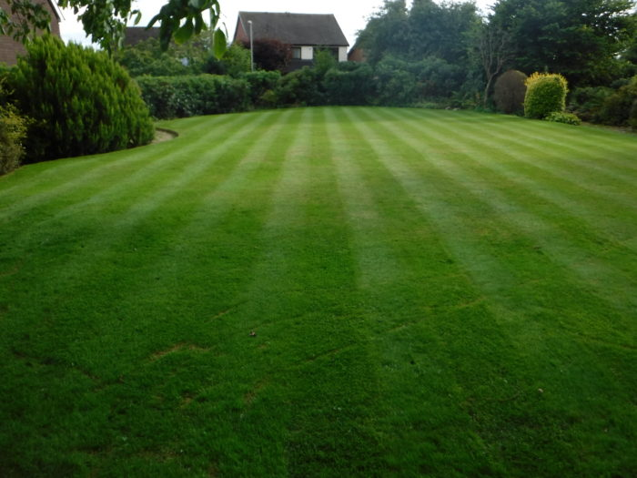 Professional Gardener in Longton - Lawn Mowing