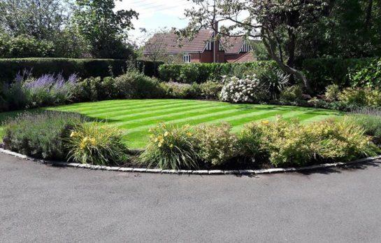Professional gardener - maintenance and landscaping.