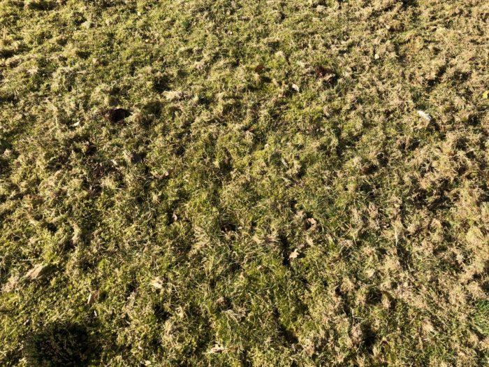 Turf overtaken by moss
