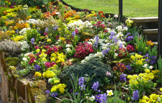 Top Garden Tips for May