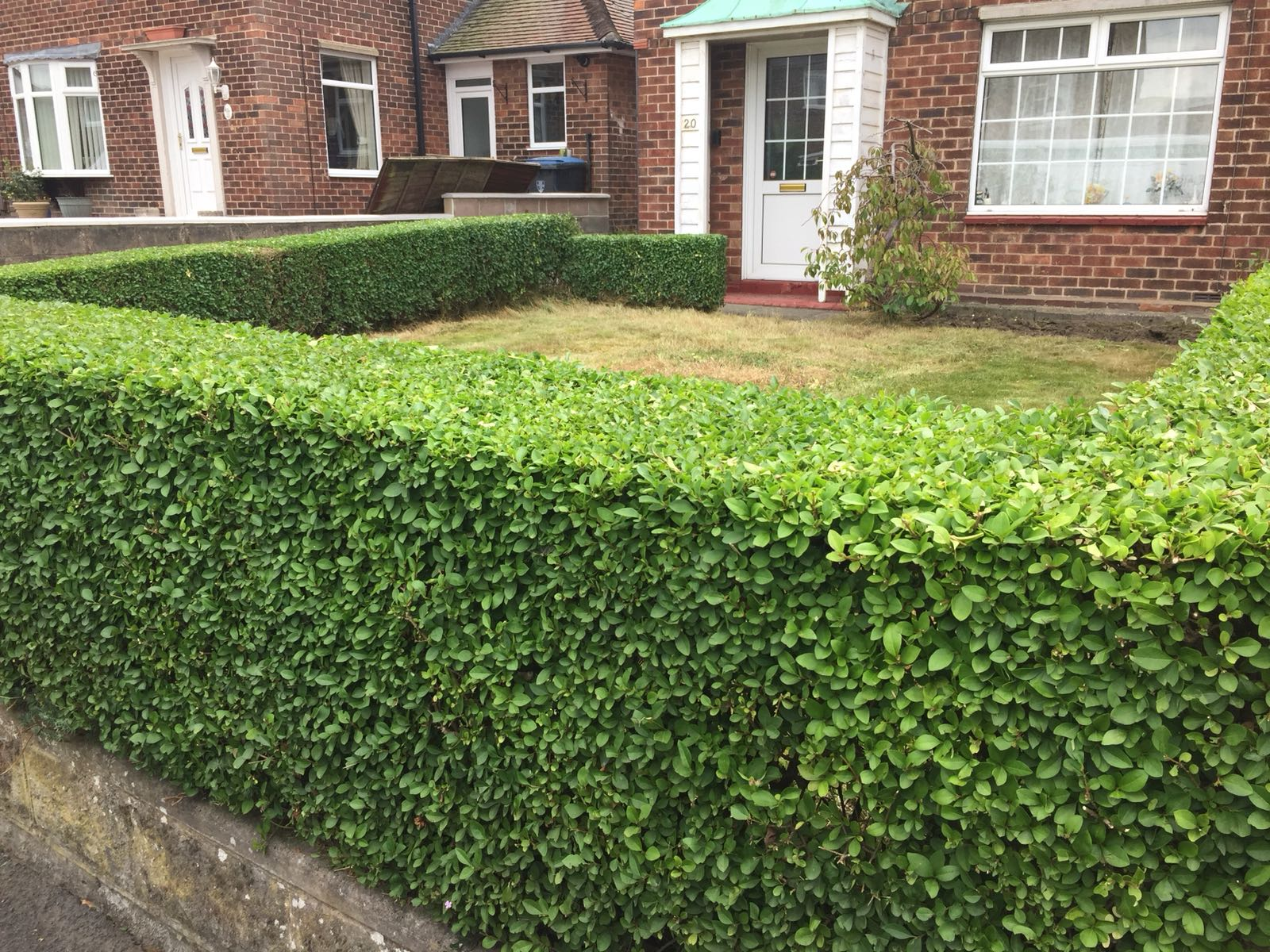 Hedge Cutting - Professional Gardener