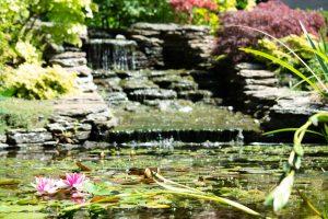 Help designing your garden