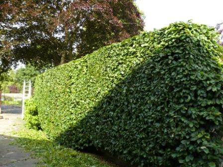 Hedge Cutting 38(1)