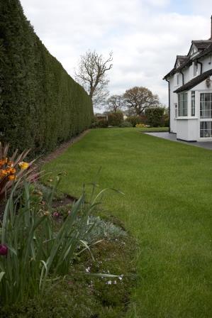 Hedge cutting in Crewe