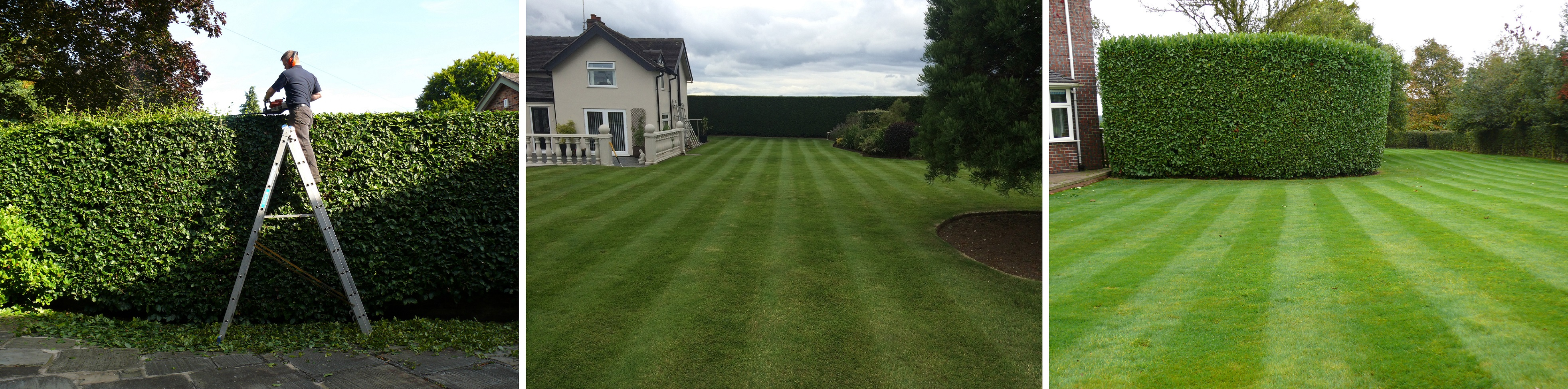 Hedge Cutting in Knutsford, Cheshire