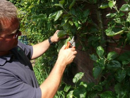 Pruning Shurb 9