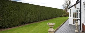 hedge-cutting-banner